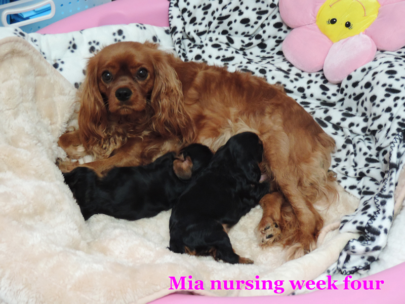 Mia and pups